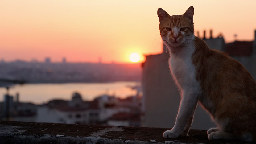 Image from Preview: Kedi + Q&A with director Ceyda Torun