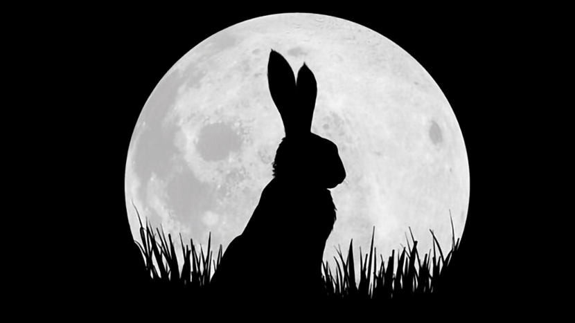TV Preview: Watership Down + Q&A